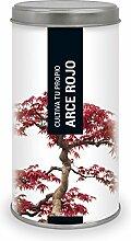 Garden Pocket–Anzucht-Set Bonsai Ahorn ro