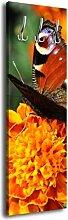 Garderobe mit Design Frühlingserwachen G446 40x125cm Wandgarderobe Schmetterling Frühling Blume