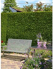 Gardline Lebensbaum Thuja Brabant 200-225 cm, 12x
