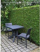 Gardline Lebensbaum Thuja plicata Martin 60-80 cm,