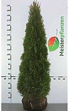 Gardline Lebensbaum Thuja Smaragd 160-180 cm, 16x