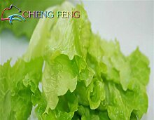 Garten-Dekoration Bonsai 100 Salatsamen Gemüse Easy To Große Salatauswahl DIY Jardin Töpfe Pflanzen wachsen