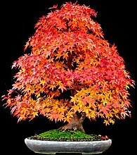 Garten-Petunie Petals Blumensamen für Garten-Petunie Semillas De Petunien, 100 Samen / bag Garten Dekoration Bonsai Blumensamen