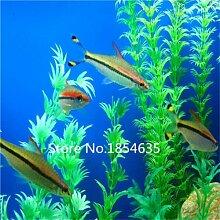 Garten Pflanze 500pcs / bag Aquarium Gras Samen, Familie einfache Pflanze Aquarium Gras Samen Bonsai Samen