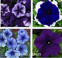 Gartenpflanze 200 Samen / bag seltene Blumensamen