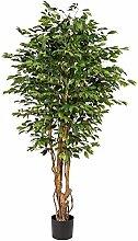 Gasper Ficus Benjamini ca 190cm grün Naturstamm,