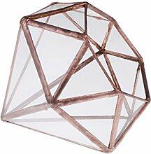 Gazechimp Glasterrarium Geometrisches Glas Sukkulente Pflanzgefäß Haus Dekoration Diamant Form - L