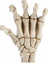Gazechimp Resin Hand Palm Schädel Skelett Modell Figur Fertigkeit Medical Teaching Dekoration