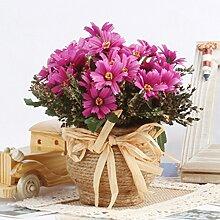 Gefälschte Blumen Dekorative Bonsai kleine frische kleine Topfblumen Set Hauptlieferung dekorative Schönheit der Chrysantheme Blumen Pflanze Simulation, gelb
