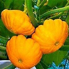 Gelbe fliegende Untertasse Melonensamen essbarer