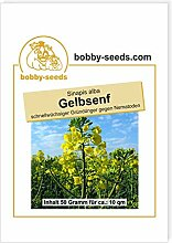 Gelbsenf Bodenkur von bobby-seeds, einjährige