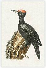 Gemälde Dryocopus Woodpecker