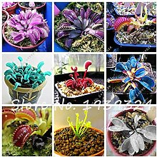 Gemischt: 100 Stücke Blau Insektenfressende