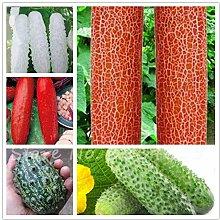 Gemischt: 30 / Bag Rote Gurke Samen Obst Gemüse