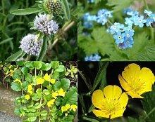 gemischtes Pflanzensortiment mit 50 Pflanzen Teichpflanzen Teichpflanze Teich