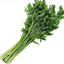 Gemüsesamen, Balkonspinat, Frühlingszwiebeln,