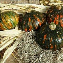 Gemüsesamen Bonsai Pflanze neue Packung Gemüsesamen Kürbis / Winter Squash Der Hof Gartendekoration Pflanze 20pcs A038