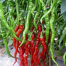 Gemüsesamen Chilli Samen - Moruga Scorpion Chili Samen Gartendekoration Pflanze 100pcs B60