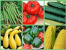 Gemüsesamen, Hinterhof Bounty, 6 Pk Special,