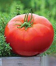 Gemüsesamen Rote Beefsteaktomate Kosmonaut Volkov