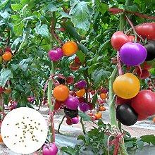 Gemüsesamen200Pcs/Bag Tomatensamen Süß leicht