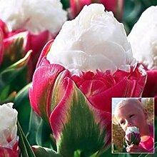 Generic Generische Eine Packung 50 Stücke Gelb Datura Samen Balkon Pflanze Blumen Topf Bonsai Geeignet Samen Garten Grüne Kräuter Mandala Blumensamen