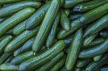 Genipap 100 Callistemon Violaceus Pflanzensamen