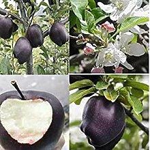 Genipap 20 Stück Nuss Walnuss Pflanze Samen