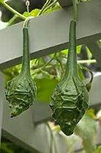 Genipap Hosta Pflanze Samen
