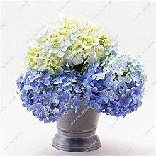 GEOPONICS 11: Import-Blumensamen, Multi Color Vier