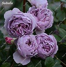 GEOPONICS 9: Rose-Blumensamen Garten Blumen