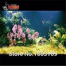 GEOPONICS Clear: 200 Aquarium Seeds/pack Samen
