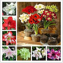 GEOPONICS Egrow 200PcsIceLittle Bonsai Pflanzen