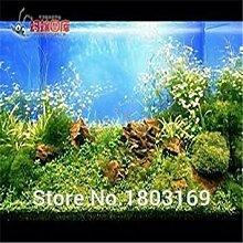 GEOPONICS Grün: 200 Aquarium Seeds/pack Samen