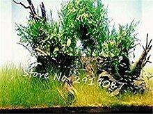 GEOPONICS Mixed 100 Samen/pack Bonsai Blumensamen
