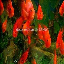 GEOPONICS Samen Aquarium Aquarium Dekoration s