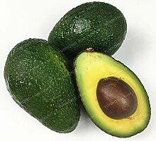 GEOPONICS SEEDS: 10 Stück Avocado Bonsa sehr
