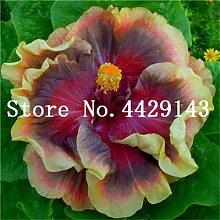 GEOPONICS SEEDS: 100 Stück Topfpflanze Bonsai