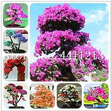 GEOPONICS SEEDS: 30 PC/bag Japanische Azalee Blume