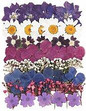 Gepresste Blumen gemischt Pack , Akelei ,