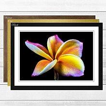 Gerahmter Fotodruck Flower Frangipani Big Box Art