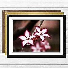 Gerahmter Fotodruck Flower Pink Lily Big Box Art