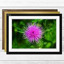 Gerahmter Fotodruck Thistle Flower Big Box Art