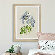 Gerahmter Kunstdruck Akelei-Blumen East Urban Home