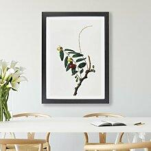 Gerahmter Kunstdruck Jujube-Pflanze von Giorgio