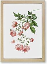 Gerahmter Kunstdruck Kletterrose von Pierre -