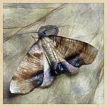 Gerahmtes Acrylbild Motte