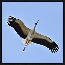 Gerahmtes Acrylbild Storch mit ausgebreiteten