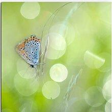 Gerahmtes Leinwandbild Schmetterling mit