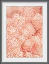 Gerahmtes Papierbild Rosa Blütenzauber Sedum East